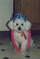 Teddy - Best dog ever I miss him